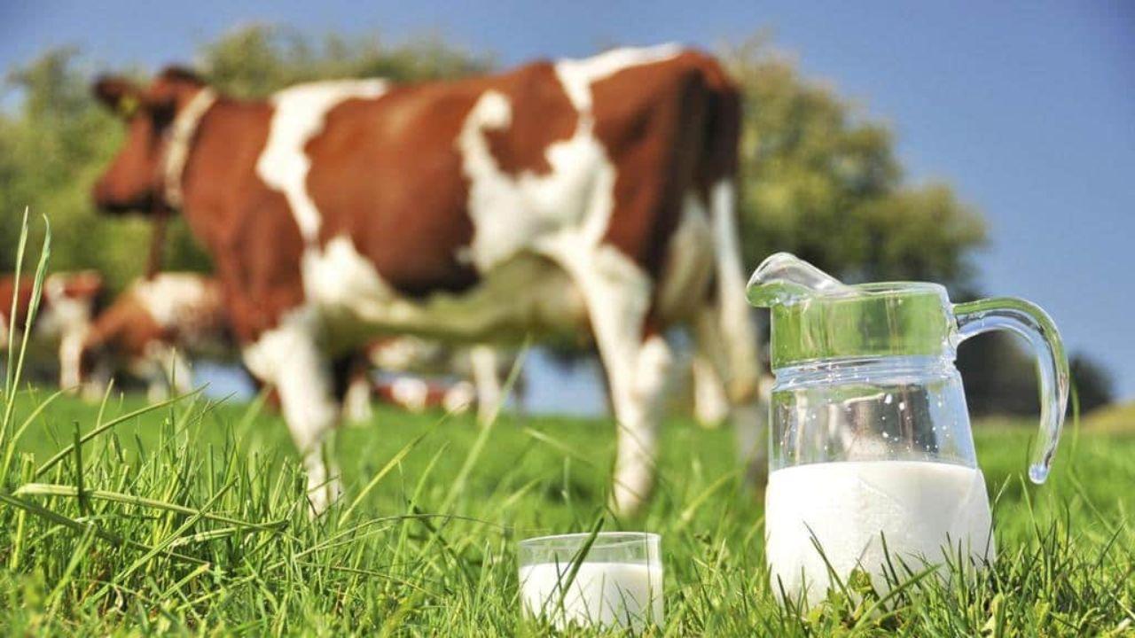 اعتراض دامداران به نرخ مصوب شیرخام