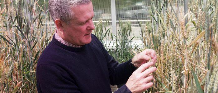 کشف ژنوم های جدید گندم و جو تحولی جهانی در تامین غذا